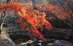 The colors of autumn Royalty Free Stock Images