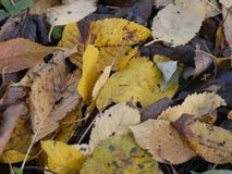 Autumn leaves on the ground. Colors of autumn leaves on the ground in the garden Royalty Free Stock Photography