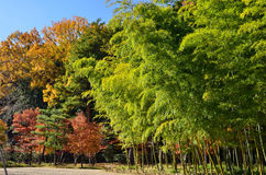 Colors of autumn leaves, Japan. Royalty Free Stock Image