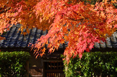 Colors of autumn leaves, Japan. Royalty Free Stock Photos