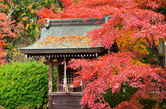 Colors of autumn leaves and little shrine, Japan. Royalty Free Stock Image