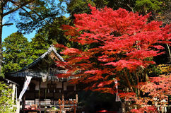 Colors of autumn leaves at old shrine, Kyoto Japan. Royalty Free Stock Photo