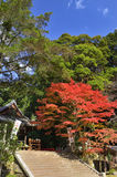 Colors of autumn leaves at old shrine, Kyoto Japan. Stock Photo