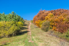 Colors of autumn Stock Image