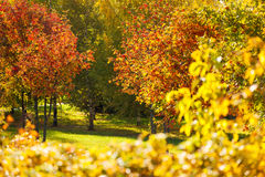 Colors of autumn, many beautiful trees in forest Stock Photos