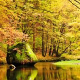 Colors of autumn mountain river. Colorful banks with leaves, trees bended above river. Big boulder in the river Stock Photos