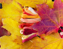 Colors of autumn, multicolor yarns looks like autumn leaves Royalty Free Stock Image