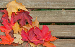 The Colors of Autumn Stock Images