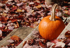 Colors of Autumn. A pumpkin sits on front stoop in autumn Stock Photo