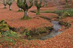 Colors in autumn season Stock Photography