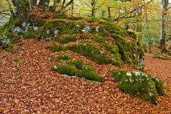 Colors in autumn season. A fall colors leaves trees autumn season Stock Photo