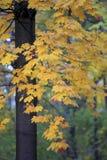 Colors of autumn season in Mazovia region in Poland. Colorful leaves and tress in autumn season in Mazovia region in Poland Stock Image