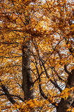Colors of autumn. A shot of a yellow leaf tree during autumn season Royalty Free Stock Images