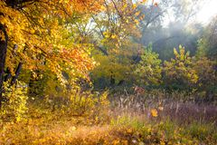 Colors of autumn sunny morning. Trees royalty free stock photos