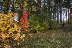The colors of autumn. Royalty Free Stock Photos