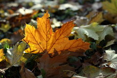 The colors of autumn Royalty Free Stock Photography