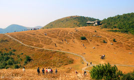 The colors of autumn. Yongtai cloud wind scenic spot in China, rolling hills, golden pasture, tourists, tourist resort Royalty Free Stock Image