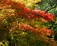 Colors blend. Super autumn colors mix.....Japanese style Stock Photos