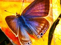 Colors of butterfly redefined Royalty Free Stock Image