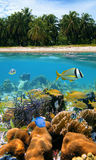 Colors of Caribbean sea. Underwater and surface view with beautiful beach and coconuts trees, coral reef and tropical fish, Caribbean sea royalty free stock images