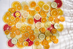 The colors of citrus fruits Stock Photos