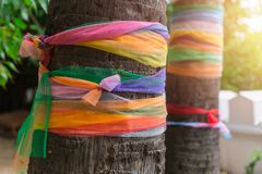 Colors cloth tied in temple for belief of the Thai buddha worship. Colors cloth wrap around the tree or fabric seven colors towel wrapped plam tree multicolored Royalty Free Stock Photography