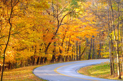 Colors on the curve. Brilliant autumn colors along the curve of a park road Royalty Free Stock Photos