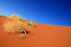 Colors of the Deadvlei Royalty Free Stock Photo