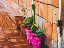 Bright in plants royalty free stock photos