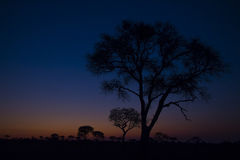 Colors of Dusk Stock Images