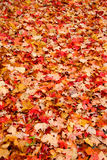 Colors Of Fall royalty free stock image