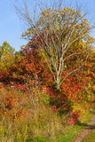 Colors of the Fall. Royalty Free Stock Images