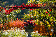 Colors of Fall Royalty Free Stock Photography