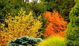 Fall Colors. Landscape is bright with colors of Fall Stock Photo