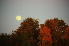 Fall Moon Royalty Free Stock Photography