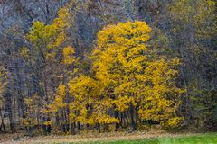 The Colors of Fall in the Midwest royalty free stock photography
