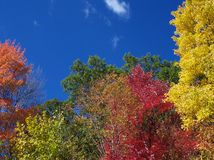 Colors of the Fall Season. Different colors of trees in the fall Royalty Free Stock Photos