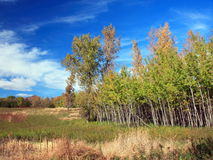 Colors of fall season in Frontenac state park. Frontenac state park in Minnesota at fall season Stock Photography