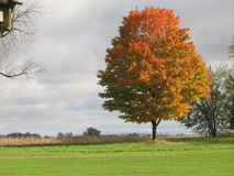 Colors of Fall. This is a tree in a landscape with beautiful colors of fall in Wisconsin Royalty Free Stock Photos