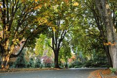 Colors of fall at the Volunteer Park, Seattle Washington royalty free stock photography