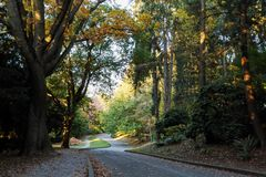 Colors of fall at the Volunteer Park, Seattle Washington Royalty Free Stock Photo