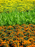 Colors in a Field Royalty Free Stock Photos