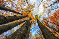 Colors of the forest in autumn Royalty Free Stock Photos