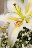 colors guldcirklar Royaltyfri Fotografi