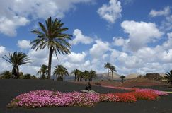 colors lanzarote royaltyfri foto