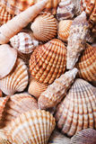 Colors of nature. Brown and orange sea shells background Royalty Free Stock Image
