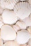 Colors of nature. White shells background Royalty Free Stock Photos