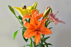 Colors of nature, Beautiful colorful lilies isolated on a white background Royalty Free Stock Images
