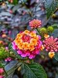 Colors of nature royalty free stock images