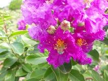 colors naturen Arkivfoton